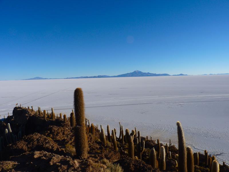 Dans cet univers arctique, l'incroyable surprise d'une colonie de cactus qui poussent depuis des centaines d'années sur un isolat écologique, l'île del Pescador