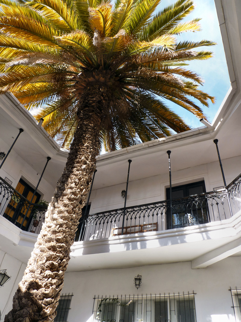 La cour intérieure de l'Alliance française (décor montmartrois, années 60) et son magnifique palmier