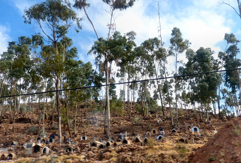 Sur le chemin du retour, à flanc de colline, un cimetière aux tombes miniatures à l'ombre d'eucalyptus