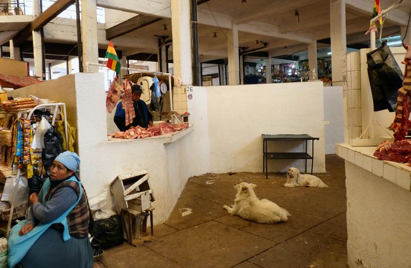En repassant par le Mercado, cette photo dédiée à M...e (elle se reconnaitra) et à tous les heureux chiens du continent sud américain