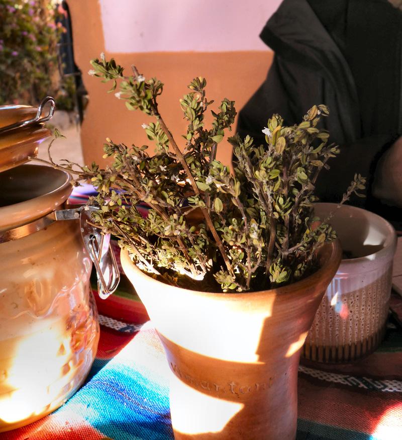 Fleurs de mounia (aident à respirer). Le lendemain, Elena complète le traitement de Marie avec des infusions de mounia et d' l'eucalyptus