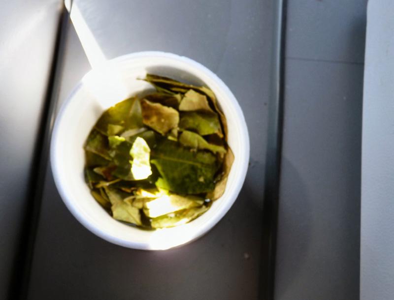 Pendant notre halte forcée, prenons des feuilles de coca pour surmonter le soroche ou mal des montagnes. Indispensable...