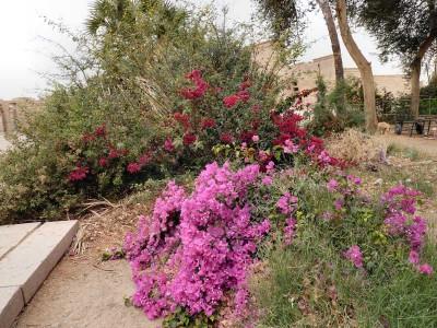 Egypte-03-mars-assouan-enr-web-800-P1460445