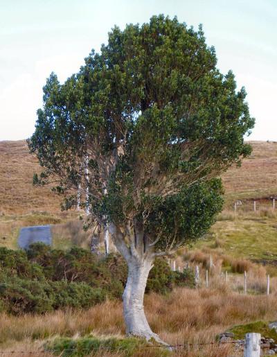 irlande-02-novembre-enr-web-800-027
