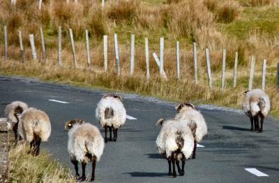 irlande-02-novembre-enr-web-800-031