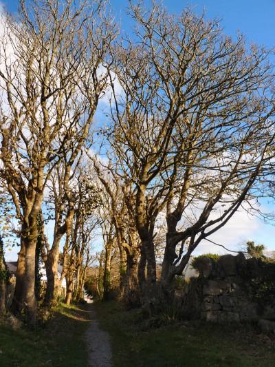 irlande-02-novembre-enr-web-800-044