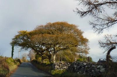 irlande-03-novembre-enr-web-800-037
