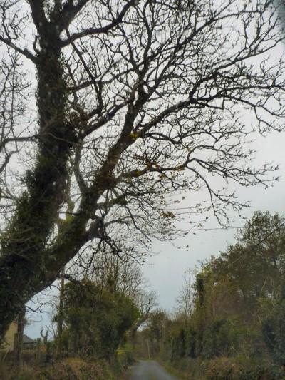 irlande-07-novembre-enr-web-800-001