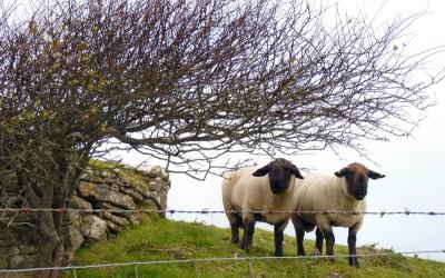 irlande-07-novembre-enr-web-800-012