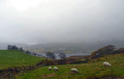 irlande-07-novembre-enr-web-800-023