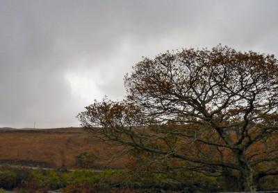 irlande-07-novembre-enr-web-800-024