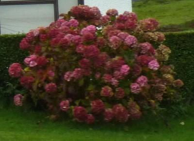 irlande-07-novembre-enr-web-800-044
