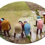 inde-centre-est-08-aout-Jagdalpur-enr-web-800-P1200193_bis