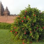 inde-sud-12-13-14-juillet-madras-mammalapuram-enr-web-800-P1000993