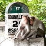 inde-sud-23-juillet-munnar-enr-web-800-P1020855