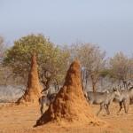 namibie-13-juillet-Windhoek-Okaukuejo-Halali-P1630387-enr-web-800