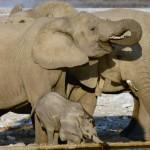namibie-13-juillet-Windhoek-Okaukuejo-Halali-P1630507-enr-web-800