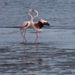 namibie-23-juillet-Swakopmund-Sesriem-P1660327-enr-web-800