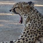 namibie-28-juillet-Fish River Canyon-Keetmanshoop-Twee Rivieren-P1670328-enr-web-800
