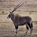 namibie-29-juillet-Mata Mata-P1670491-enr-web-800