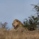 namibie-30-juillet-Mata Mata-Mariental-P1670838-enr-web-800